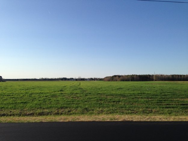 Coastal Carolina Farmland near Wilson, NC