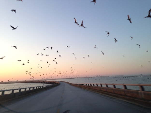 Headed south on 12! Thousands of birds!